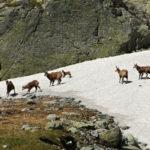 Kamzikom v Tatrach sa dari viac