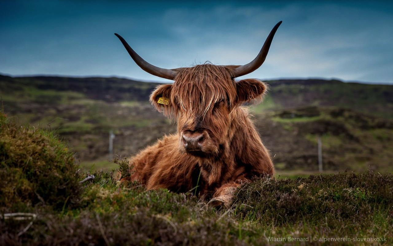"""Tragická nehoda s kravou a následný verdikt na Krajskom súde v Innsbrucku viedli k veľkej neistote medzi poľnohospodármi a návštevníkmi vysokohorských oblastí. """"Až doteraz boli vlastníci spoločenských zvierat právne zodpovední za nehody a incidenty."""